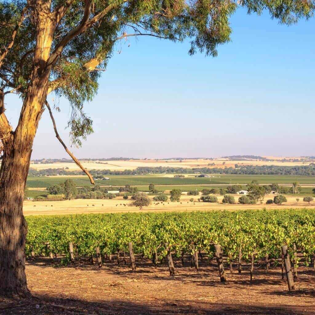 Barossa Valley - South Australia Road Trips