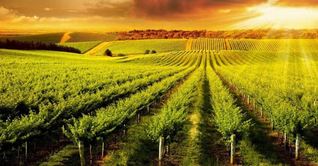 Adelaide Hills Winery - Things To Do In The Adelaide Hills - South Australia Road Trips