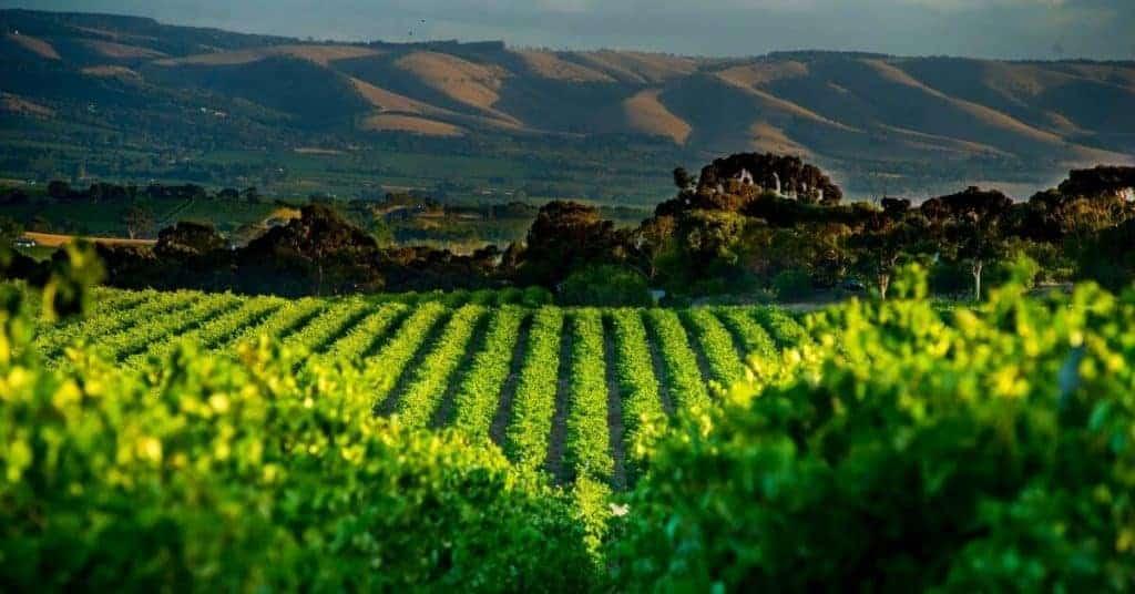 McLaren Vale Winery - Things To Do Fleurieu Peninsula - South Australia Road Trips