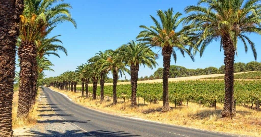 Seppeltsfield - Things To Do In Barossa Valley - South Australia Road Trips