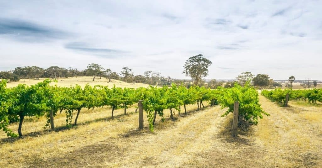 Winery in the Barossa Valley - Regions of South Australia - South Australia Road Trips