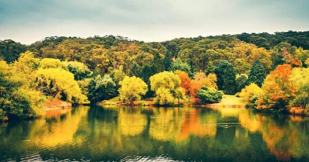 Mount Lofty Botanic Gardens - Day Trips From Adelaide - South Australia Road Trips