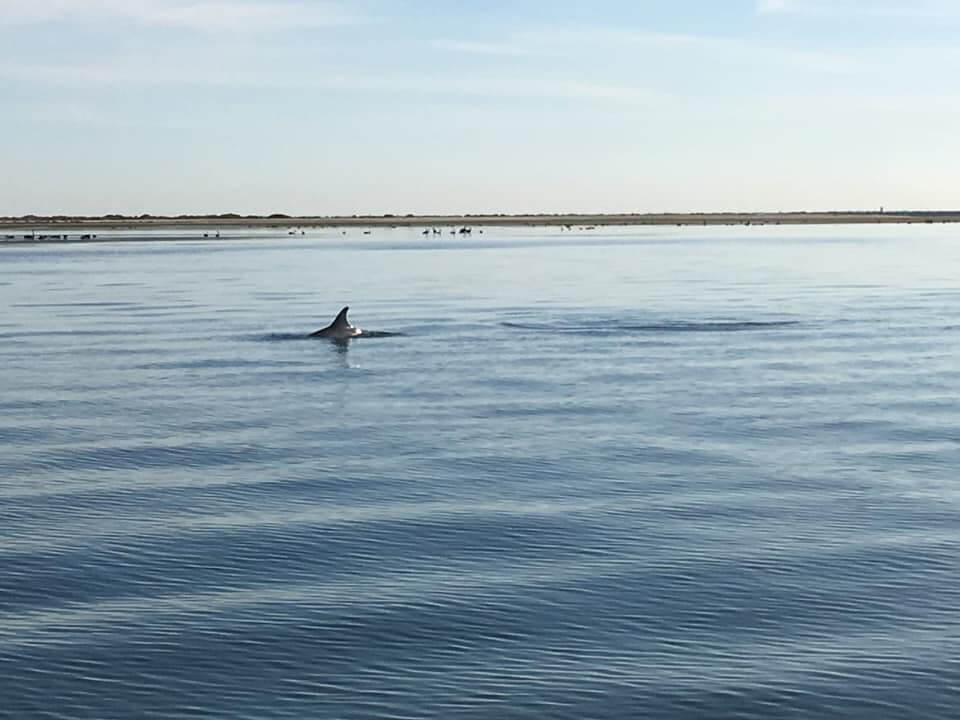 Port River Dolphin - Things To Do In Adelaide - South Australia Road Trips